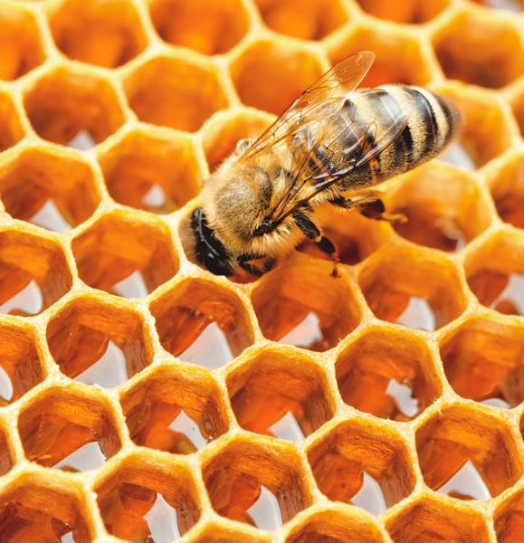 A Beekeeper's Dinner