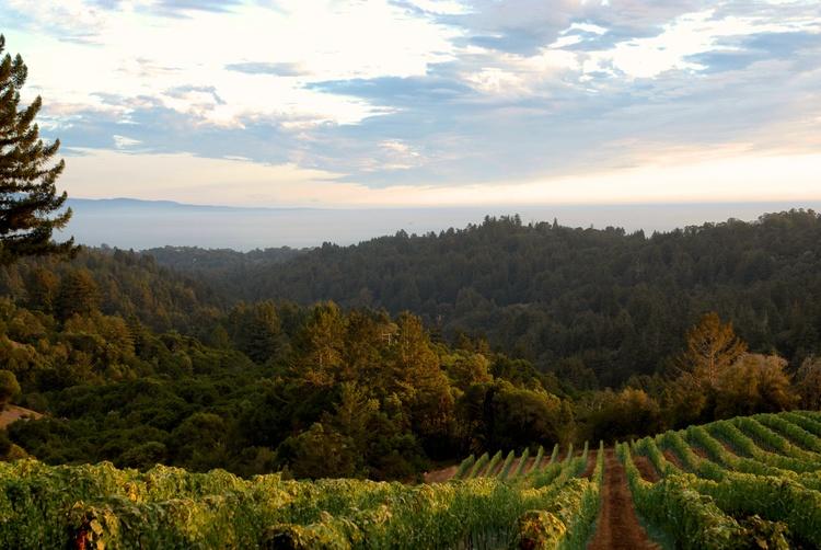 One of the vineyards for Bircihino Wines, in California.