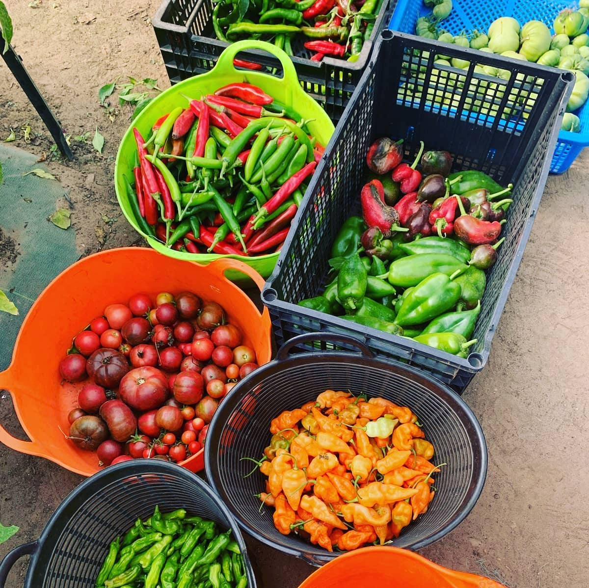 Assorted locally grown produce in baskets.